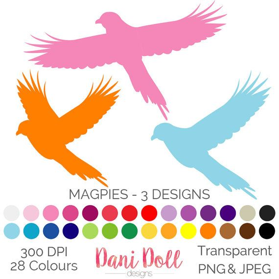 Magpie Bird Hand Drawn 28 Colours 3 Designs Clip Art Elements PNG JPEG 300 DPI Commercial Use instant Download by danidolldesignsx