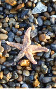 L'histoire d'un vieil homme qui sauve des étoiles de mer une à une pour se sentir utile