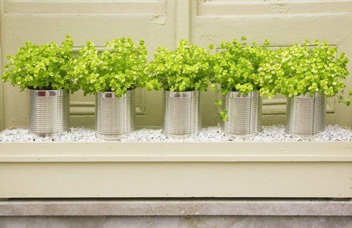 Pflanzen und Zöglinge in dekorativen Behältnissen verkaufen.  (Löcher unten rein bohren)