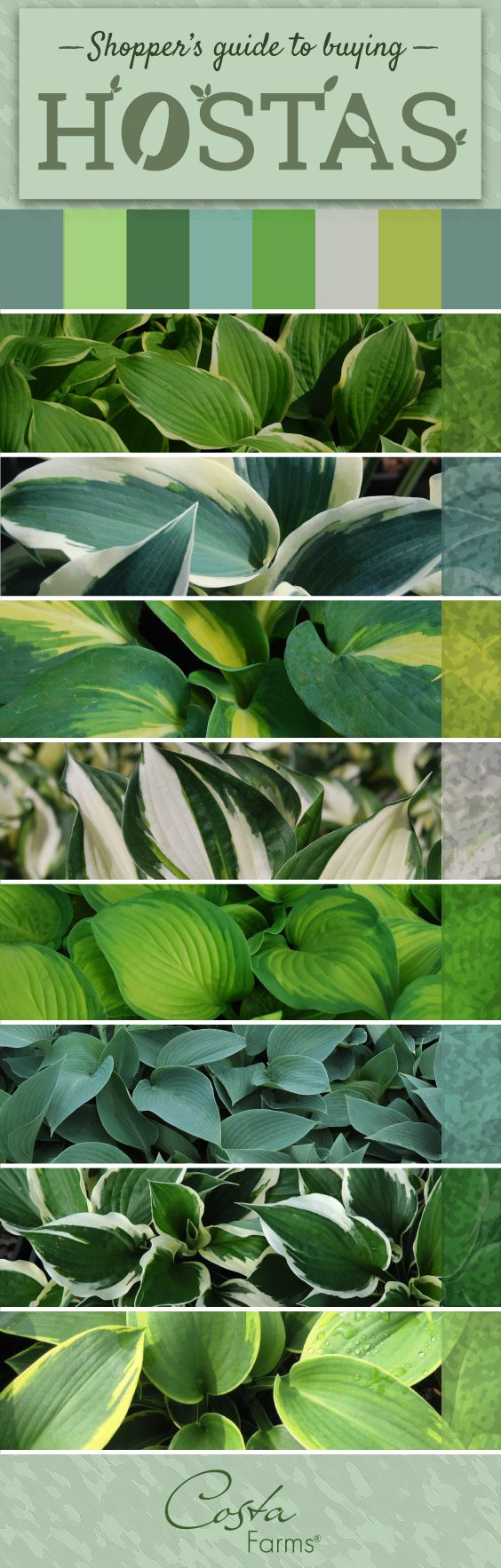 There are so many beautiful, easy-care hostas available. Get tips for selecting…