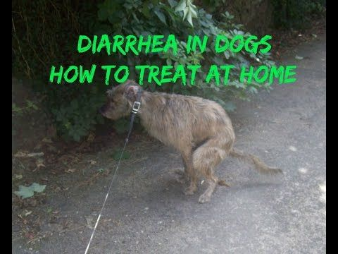 how to give a dog diarrhea