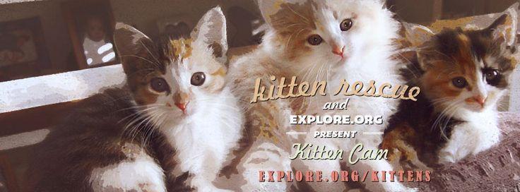 Kitten Cam! Watch These Kittens Play All Day  sooooo cute