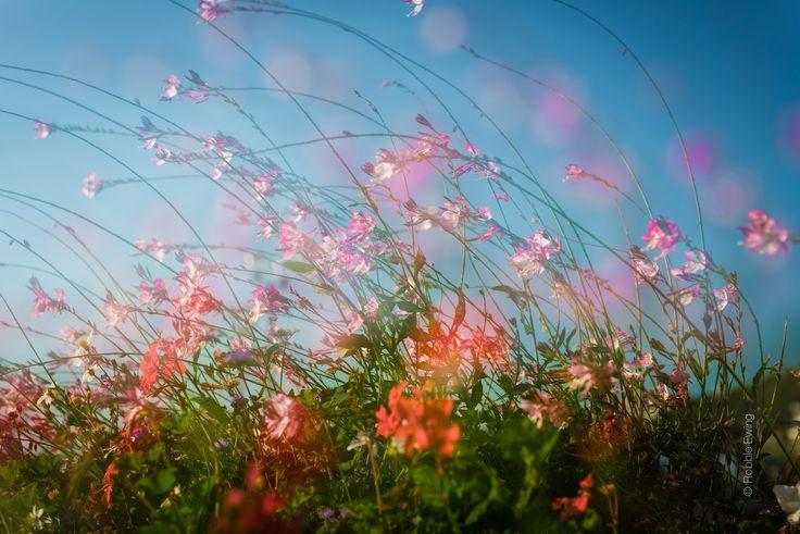 roadside flowers | Flickr - Photo Sharing!