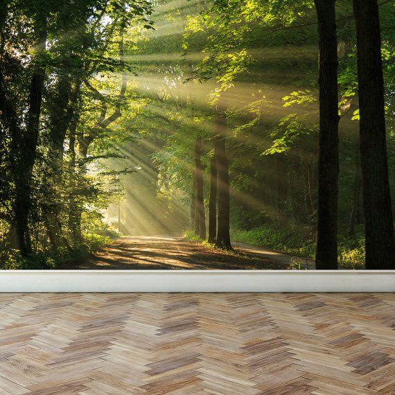 Wand Wandbild durchschimmern der Waldbäume von RoyalWallSkins