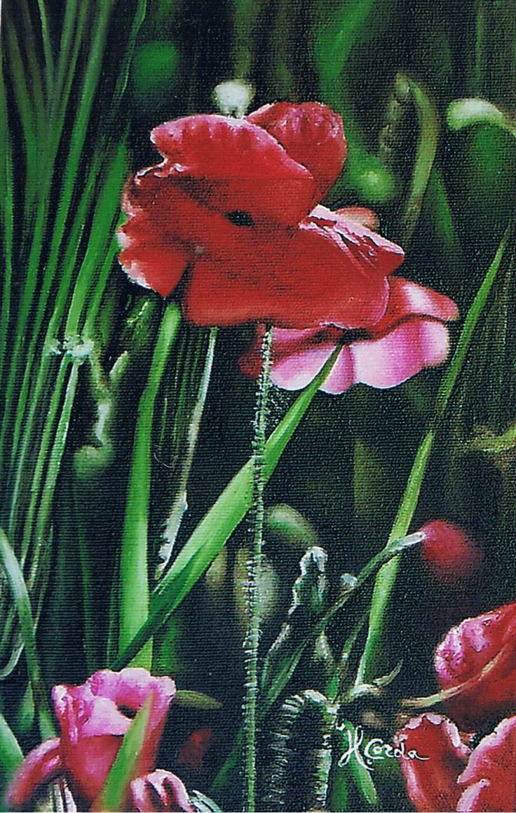 Nature, poppy flowers, Oil Painting, 20x30 cm 2006
