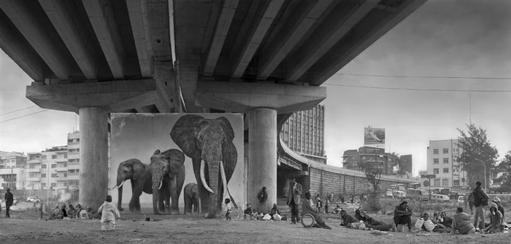 UNDERPASS-WITH-ELEPHANTS-800px
