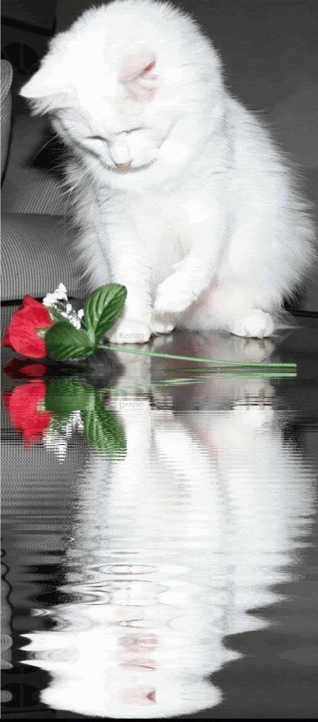 GIF,  animated beautiful reflections   Rosas, Flores, Reflection, Cats, Animated Gifs, Animated Gif, Animated ...