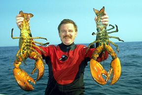 Capt. Dan Berg with two giant lobster recovered from the Steel Wreck. They are not the biggest ever caught but still very tasty and provide more than enough food for the entire family. Shipwreck diving off Long Island NY.