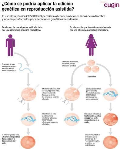 Expertos  europeos en reproducción asistida reclaman un marco que regule la investigación con embriones de la revolucionaria técnica 'CRISPR'