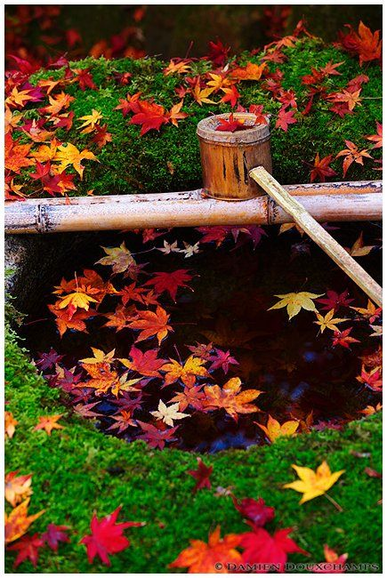 Bamboo ladle, water basin and maple leaves in zen garden (… | Flickr