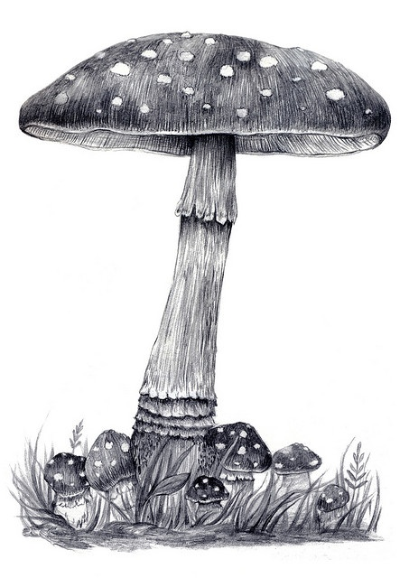 I like the grass and small mushrooms. Just add paw prints in the grass and my fairy laying on a tree branch above.