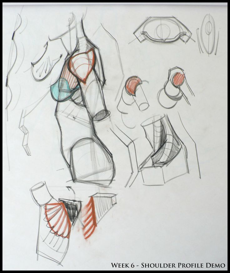 ✤ || CHARACTER DESIGN REFERENCES | 解剖 •  علم التشريح • анатомия • 解剖学 • anatómia • एनाटॉमी • ανατομία • 해부 • Find more at https://www.facebook.com/CharacterDesignReferences & http://www.pinterest.com/characterdesigh if you're looking for: #anatomy #anatomie #anatomia #anatomía #anatomya #anatomija #anatoomia #anatomi #anatomija || ✤
