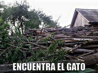 miaucoles_encuentra_el_gato_3