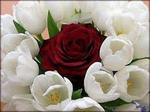 descargar-imagenes-de-flores-3.jpg (500×374)
