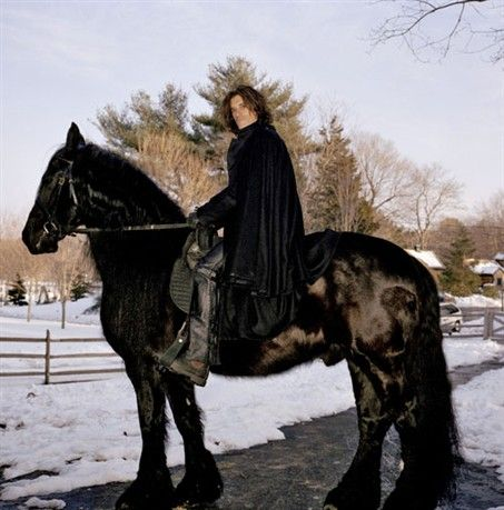 A stately Friesian belonging to Aerosmith guitarist Joe Perry, who raises them on his horse ranch in Vermont.