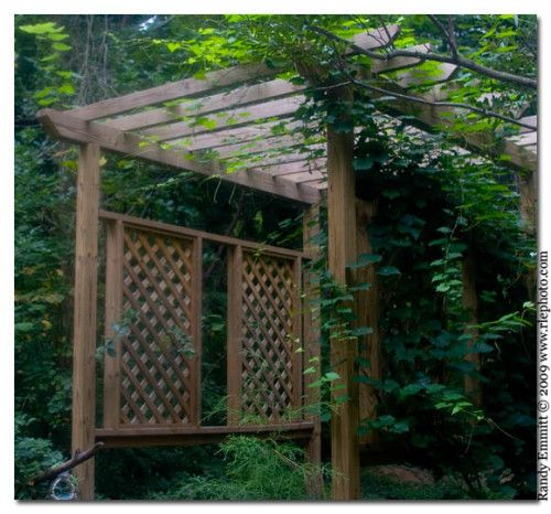 40 best images about grapevine arbor on Pinterest Grape