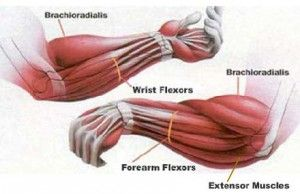 Self myofascial release for forearms