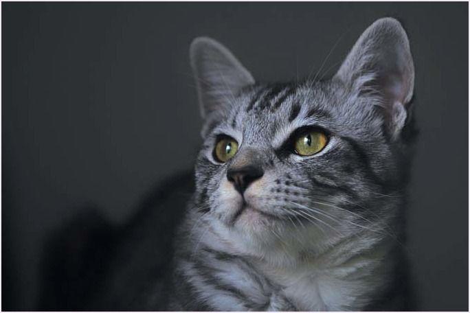 21匹 4にゃん日記 子猫 猫 家 猫