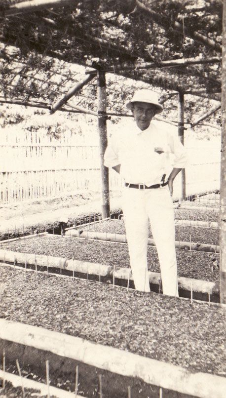 Life in Dutch East Indies (Indonesia) before independence. Memories of the Dutch East Indies: From Plantation Society to Prisoner of Japan : Elizabeth's father inspecting coffee seeds.