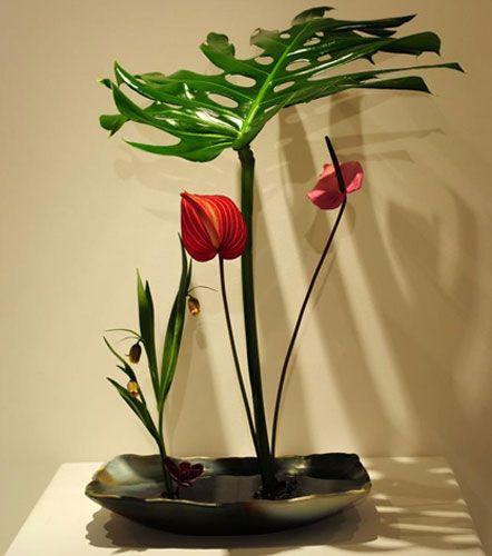 flores muy decorativas y ex ticas ideales para decorar tu