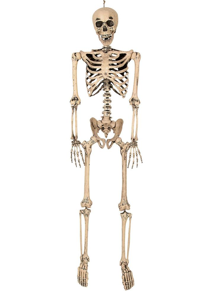 lifesize poseable skeleton wholesale family friendly decorations for halloween - Fright Catalog Halloween Decorations