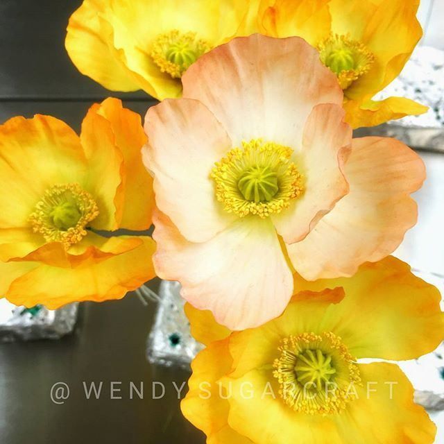 49 best gumpaste fondant poppies images on pinterest fondant fun gold and peach iceland poppies by wendy sugarcraft mightylinksfo