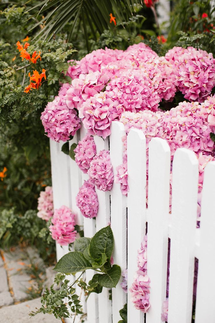 pink hydrangeas + white picket fences