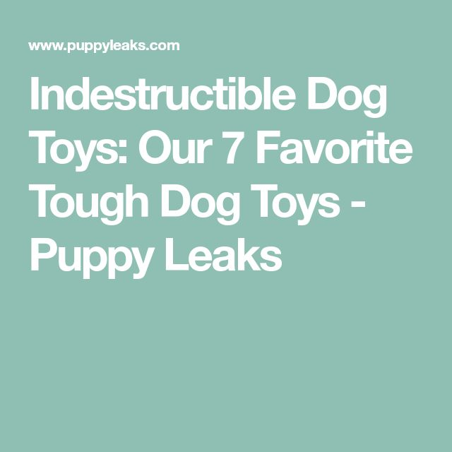 Indestructible Dog Toys: Our 7 Favorite Tough Dog Toys - Puppy Leaks