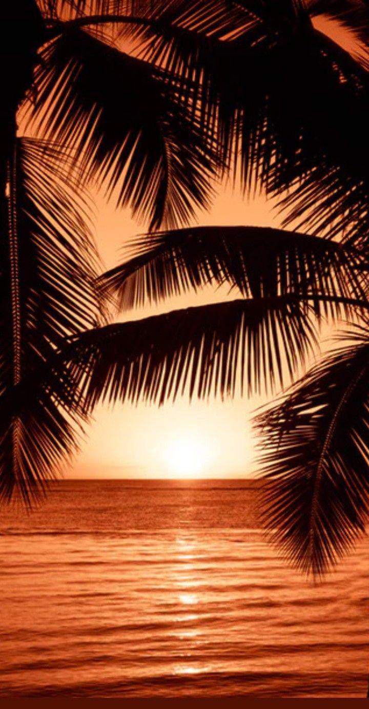 Paisagem Praia Coqueiro Mar Sol Pordosol Natureza Wallpaper