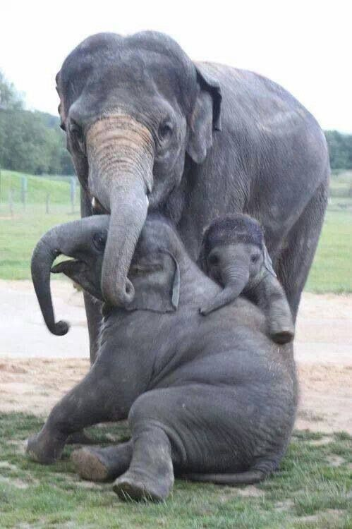 "Awww... Elephant families love being close together and having fun! ""Hello! Come and join us!"" <3"