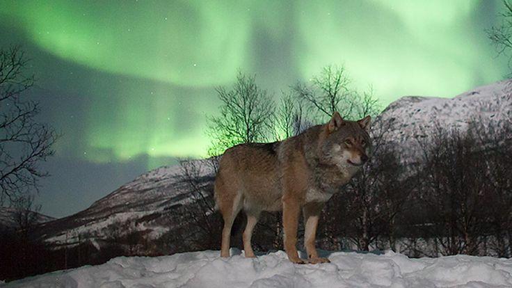 Narvik: waar de fjorden de bergen ontmoeten