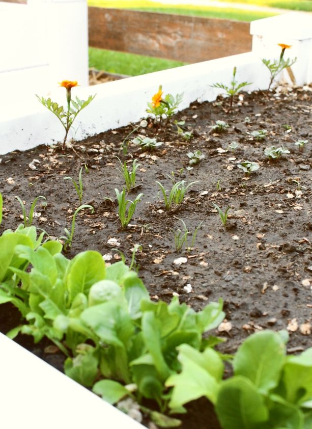 Raised Bed Gardening Using The Seeding Square I Love Planting A Combination Of Veget Raised Garden Beds Building A Raised Garden Vegetable Garden Raised Beds