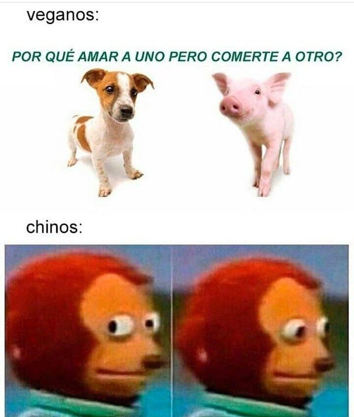 Memes Del Restaurante Chino Que Vendia Carne De Perro En Tijuana Tvnotas Irresistible Chistes Y Bromas Memes En Espanol Memes
