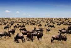 Resultados de la búsqueda de imágenes: ploblacion de animales - - Yahoo Search