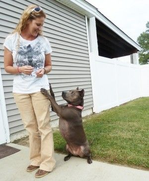 From fear to love of pit bulls - Leah Brewer used to be afraid of pit bulls.  Brewer, 41, of Roanoke Rapids, said media depictions of the breed, which is really more of a type of dog than an actual breed, colored her perceptions to the point she felt afraid to be around them.  However, in 1992, she met her husband Eric, who owned a pit bull named Axel, and Brewer's whole life, particularly how she saw pit bulls, changed.