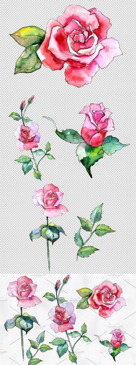 Wildflower Pink Rose Png Watercolor Pink Rose Png Pink Rose Watercolor Flowers