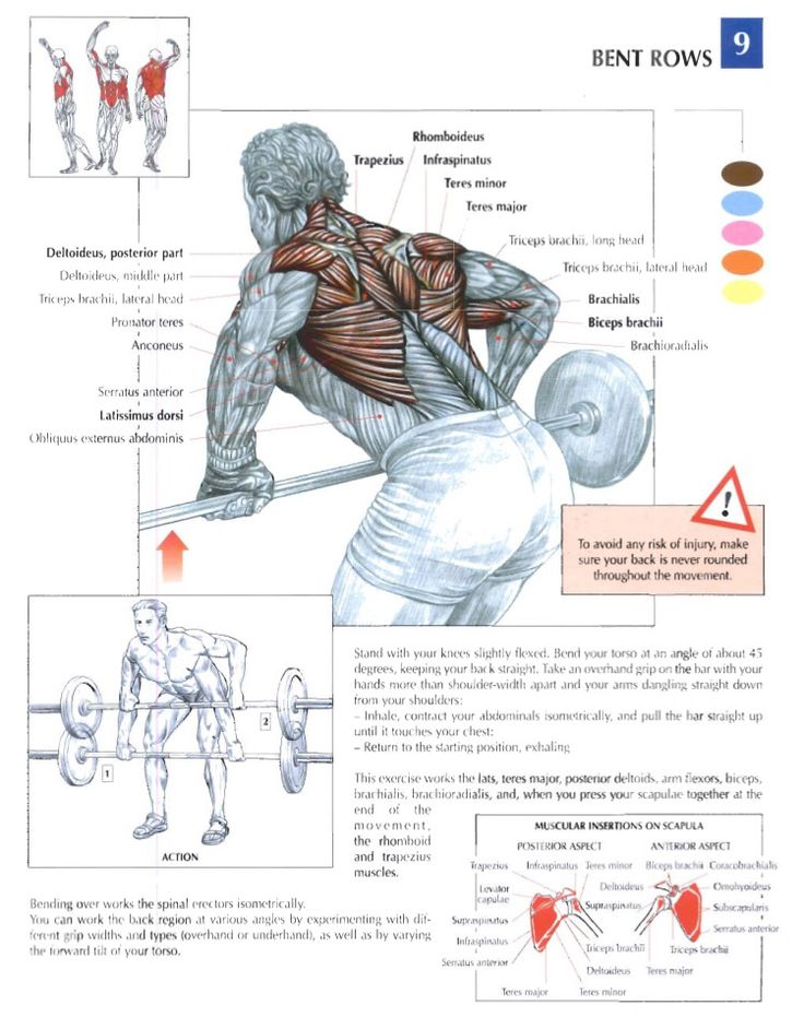 19 best Trainin Anatomy (Back) images on Pinterest | Bodybuilding ...