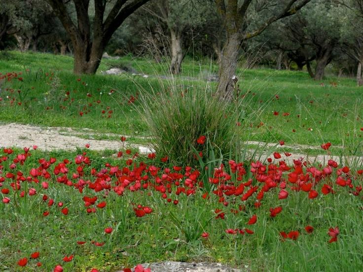 """Την Κυριακή 21 Απριλίου, ο Ευπαλίνος καλεί τους φίλους του στο λόφο Κάντζας για """"ΠΙΚ ΝΙΚ ΣΤΗ ΦΥΣΗ"""", με σκοπό να στηρίξουμε το έργο των Φίλων της Μέριμνας με ένα ανοιξιάτικο πικ νικ για όλη την οικογένεια! Θα σας περιμένουμε εκεί με πολυάριθμα παιχνίδια και δραστηριότητες για μικρούς και μεγάλους, όπως κυνήγι θησαυρού, τοξοβολία, πατατοδρομίες και διελκυστίνδα! Τα έσοδα της εκδήλωσης θα προσφερθούν στην Παιδική Ανακουφιστική Φροντίδα παιδιών και εφήβων, της Μέριμνας www.merimna.org.gr/."""