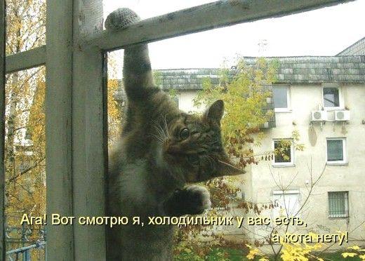 Кот-прикол.