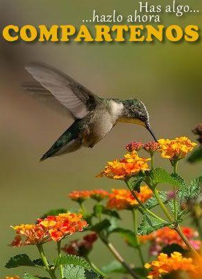 COLIBRIPEDIA | Colibríes. Enciclopedia Especializada