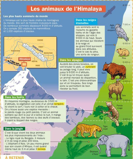 Educational infographic & data visualisation Fiche exposés : Les animaux de l'Himalaya... Infographic Description Fiche exposés : Les animaux de l'Himalaya - Infographic Source