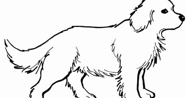 Golden Retriever Coloring Page Luxury Golden Retriever Puppy