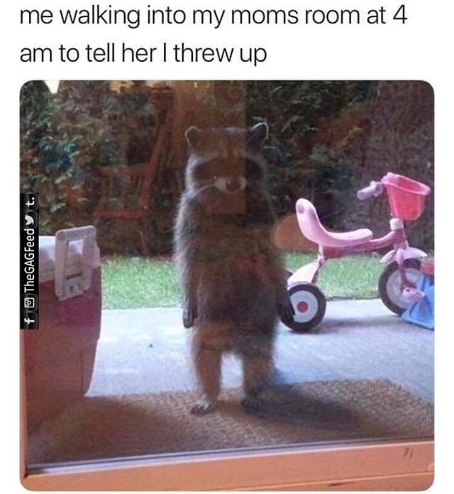 Mom Wake Up Animals Doing Funny Things Stupid Funny Memes Funny Relatable Memes
