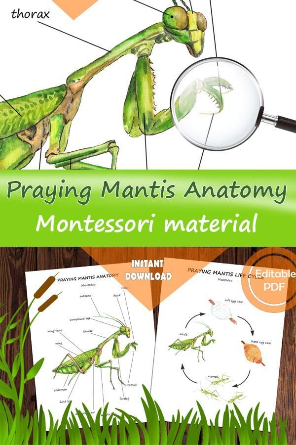 Praying Mantis Unit Study In 2020 Homeschool Nature Study Science Activities For Kids Study Unit