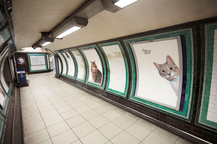 A group of cat-lovers has redecorated an entire south London Tube station by replacing adverts with pictures of cats. Commuterspassing through Clapham Common station today stopped to marvel at the postersaftercampaigners raised £23,000 on a crowd-funding website to give the station a makeover. The group – called the Citizens Advertising Takeover Service, or CATS for short - said they want to give passengersa break from the constant advertising on the underground.