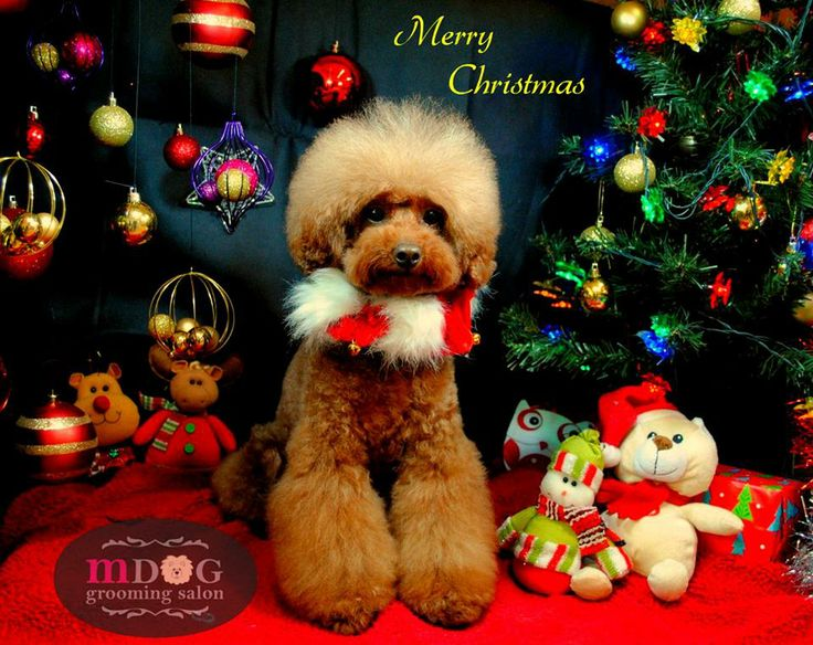 Merry Christmas LingLing