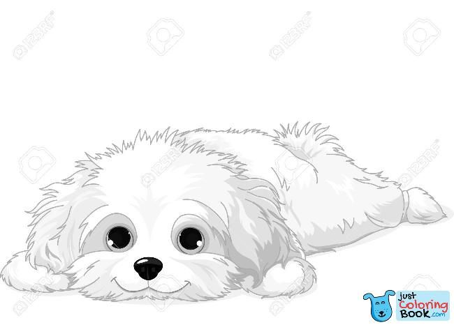 Image Result For Fluffy Dog Coloring Pages Dog Coloring Page