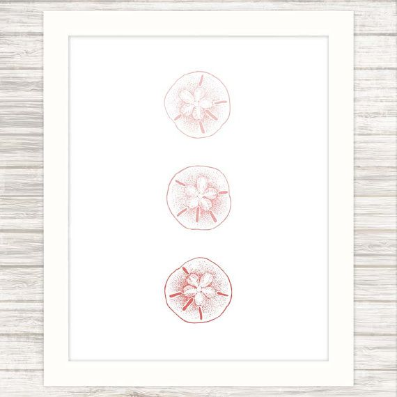 Three Sand Dollars in Ombre Coral  Sealife  Wall by paper4download