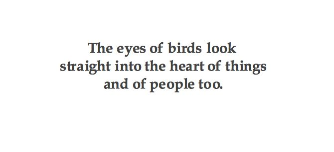 The eyes of birds