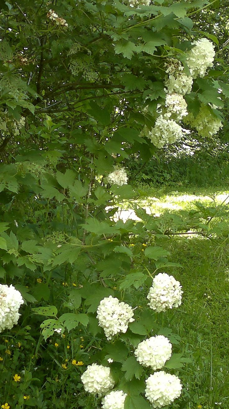 Green, and white flowers
